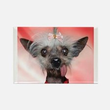 Unique Chinese crested Rectangle Magnet (10 pack)