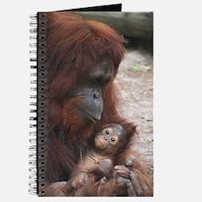 Journal-Orangutans