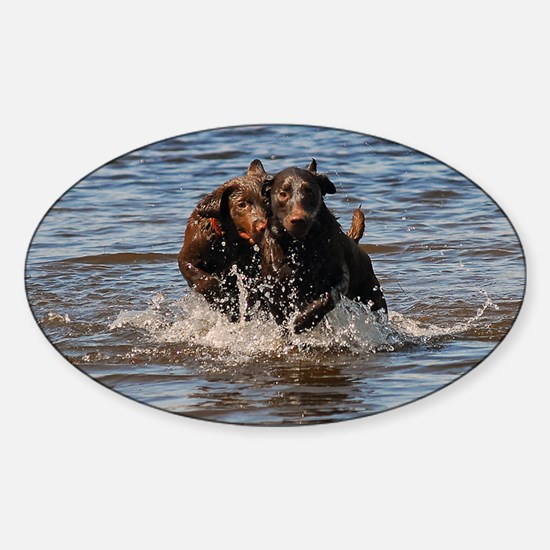 Chocolate Labs Sticker (Oval)