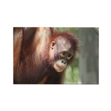 Rectangle Magnet-Orangutan