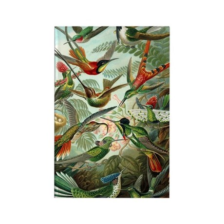 Vintage Haeckel Hummingbirds Rectangle Magnet