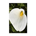 Calla Lilly Sticker (Rectangle 50 pk)