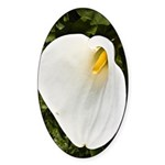 Calla Lilly Sticker (Oval 50 pk)