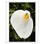Calla Lilly Small Poster