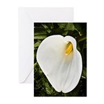 Calla Lilly Greeting Cards (Pk of 20)