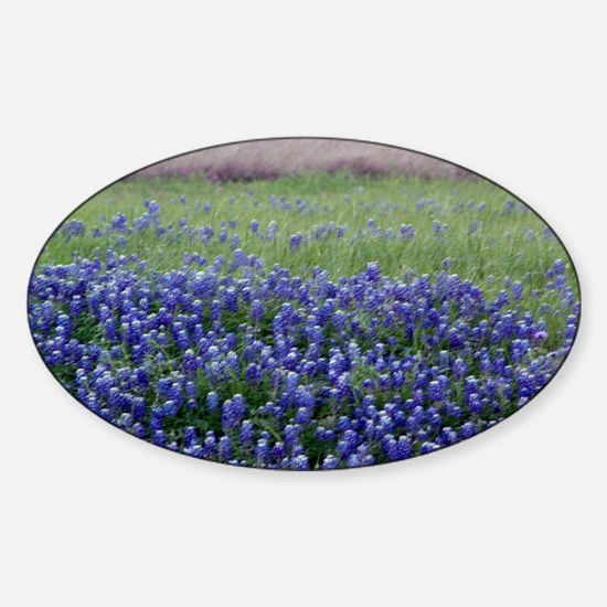Blue Bonnets Oval Decal