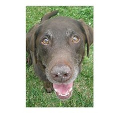 Chocolate Lab Photo Postcards (Package of 8)