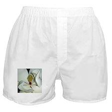 Magnolia grandiflora Boxer Shorts