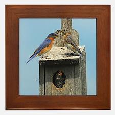Bluebird Family Framed Tile