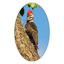 Female Pileated Woodpecker Decal