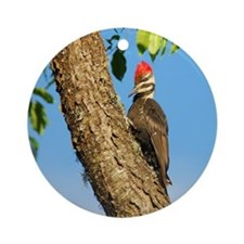 Female Pileated Woodpecker Ornament (Round)