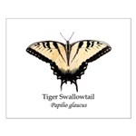 Tiger Swallowtail Small Poster