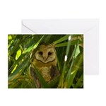 Palm Tree Owlet Greeting Cards (Pk of 20)