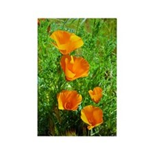 Rectangle California Poppies Magnet