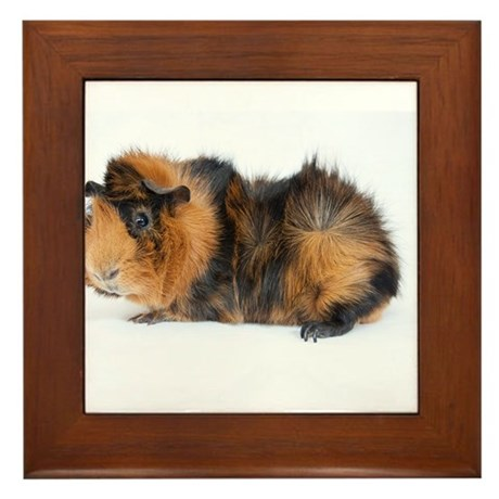 Brindle Abyssinian Framed Tile