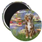 Lilies2-Australian Shep (#5) Magnet
