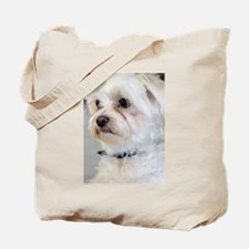 Maltese / Maltese Mix Tote Bag