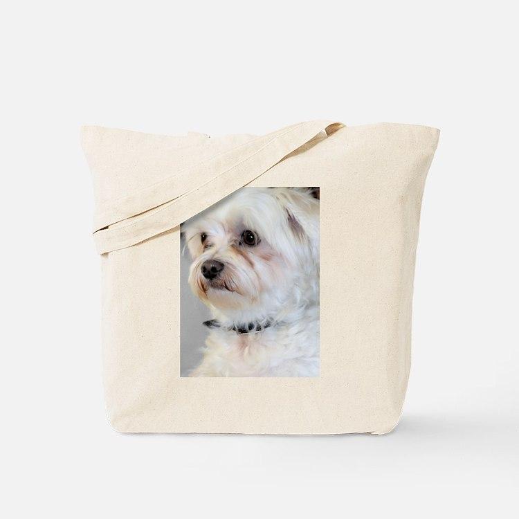 Maltese / Maltese Mix Tote Bag