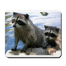 Racoon Buddies Mousepad