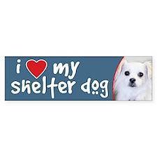 Shelter Dog-White Chihuahua Mix Bumper Car Sticker