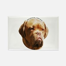 Cute Dogue de bordeaux Rectangle Magnet (100 pack)