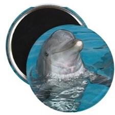 dolphinsmileformousepad2 Magnets