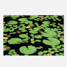 Lilypads Postcards (Package of 8)