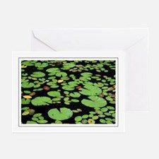 Lilypads Greeting Cards (Pk of 10)