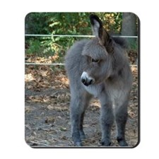 Mini Donkey Foal Sweetheart Horse Lover Mousepad