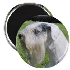 Sealyham Terrier Head Shot Magnet