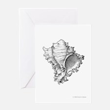 Murex Shell Greeting Card