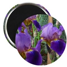 "PURPLE IRIS 2.25"" Magnet (10 pack)"