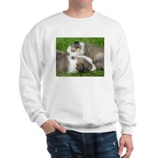 Sleeping Sheltie Puppy Sweatshirt
