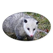 Opossum Decal
