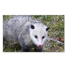 Opossum Decal
