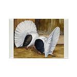 Saddle Fantails Rectangle Magnet (10 pack)