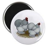 "Cochins: Self Blue 2.25"" Magnet (100 pack)"