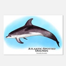 Atlantic Spotted Dolphin Postcards (Package of 8)