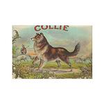 Collie antique label Rectangle Magnet (100 pack)