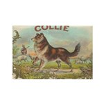 Collie antique label Rectangle Magnet (10 pack)