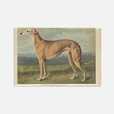 Greyhound Dog antique print Rectangle Magnet