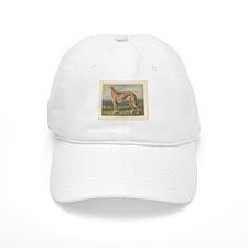 Greyhound Dog antique print Baseball Cap