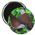 Ringneck Doves Magnet