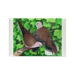 Ringneck Doves Rectangle Magnet