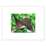 Ringneck Doves Small Poster