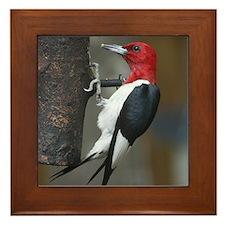 Red Headed Woodpecker Framed Tile