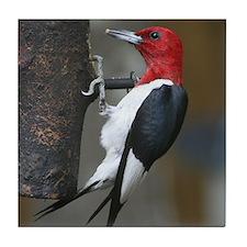 Red Headed Woodpecker Tile Coaster