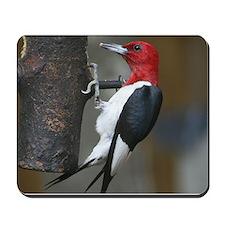 Red Headed Woodpecker Mousepad