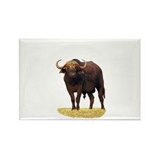 African Water Buffalo Rectangle Magnet (100 pack)