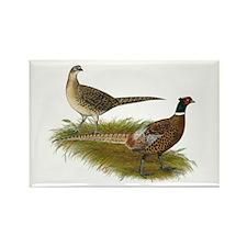 Ringneck Pheasant Pair Rectangle Magnet